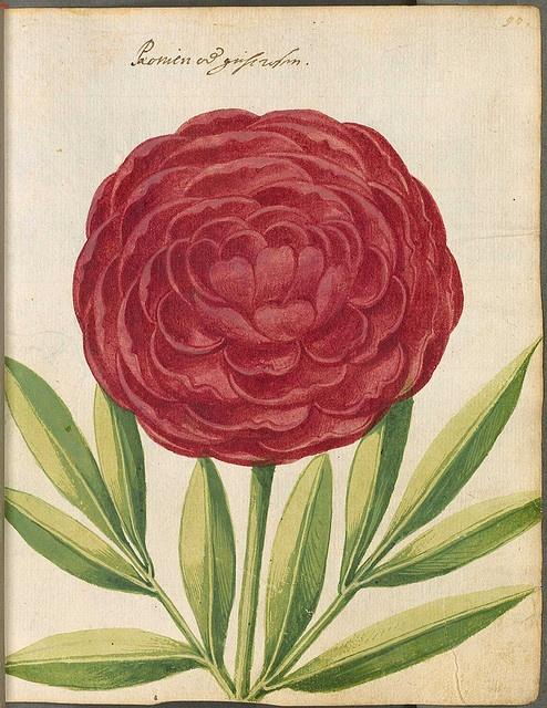 flower Botanical Illustration