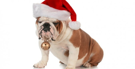 Great Pet Gifts for Pet Lovers #pets #gifts
