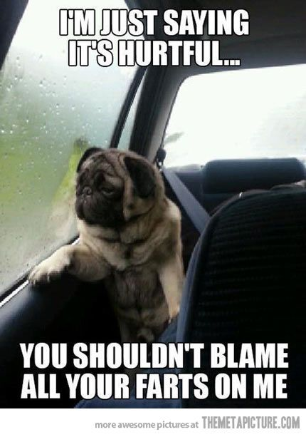 hahahaha We do this to our dog :)
