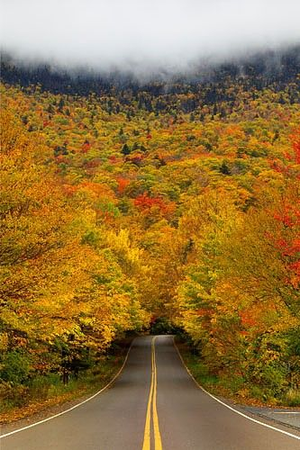 Autumn Tree Tunnel in Smuggler's Notch State Park - Vermont, USA.