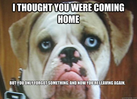 Poor baby #dog I would stay home for you!