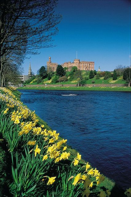 Looking across the River Ness to Inverness Castle, Inverness, Scotland.  Scotland is covered with daffodils!  They even grow wild along the roadsides, in pastures and fields, and along river bands.  Gorgeous!!