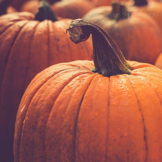 Fall Pumpkins, Colorful Kitchen Decor Orange #halloween #fall #pumpkin #decor
