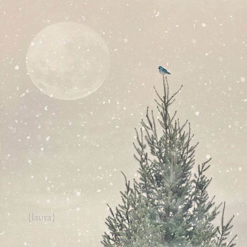 Christmas Photography - Holiday Gift - Little Blue Bird - Dreamy and Vintage Inspired  - Original and Signed - Fine Art Photograph. $25.00, via Etsy.