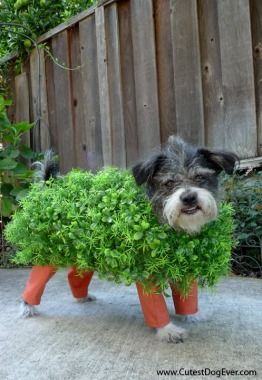 The Chia Pet! How cute is this hilarious DIY costume!