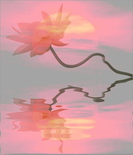 Lotus Flower Sunset Reflections