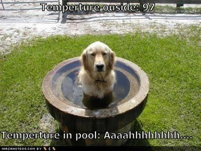 cool dog quotes