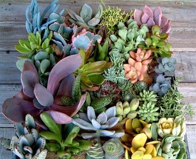 super colorful suculent arrangement!