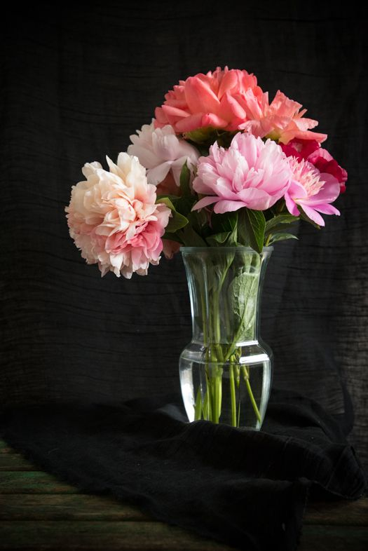 Still life of Peonies by dinaavila  #Photography #Flowers #Peonies