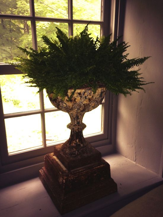 Urn weakness. #gardening #interiors