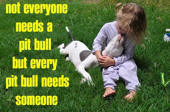 Every pit bull needs someone...