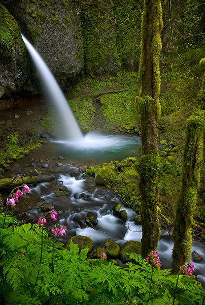 Ponytail Falls & pretty flowers,  Columbia River Gorge, Oregon