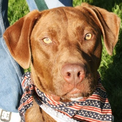 Liberty needs some love. Give her some by adopting her today!