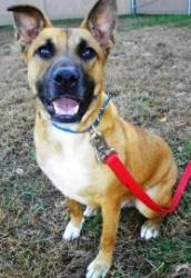 C J is an adoptable Shepherd Dog in Lincolnton, NC. At Lincoln County Animal Services, there is an $85 dollar adoption fee. This fee covers the following services for your pet: * Spay or Neuter * Worm...