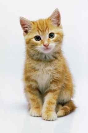 #Livecam: #Kittens, kittens, kittens #animalrescue #cute #cats