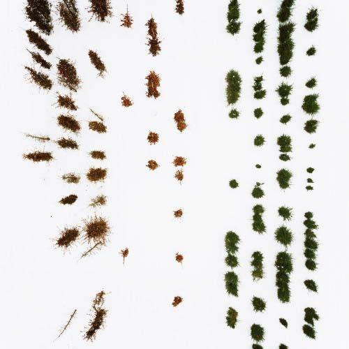 Tree Nursery by Photographer Gerco de Ruijter