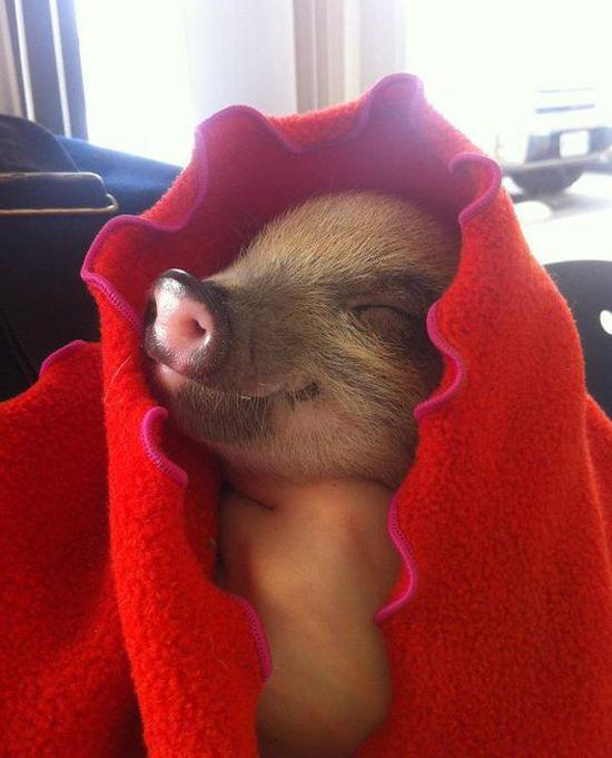 Love the little piggy