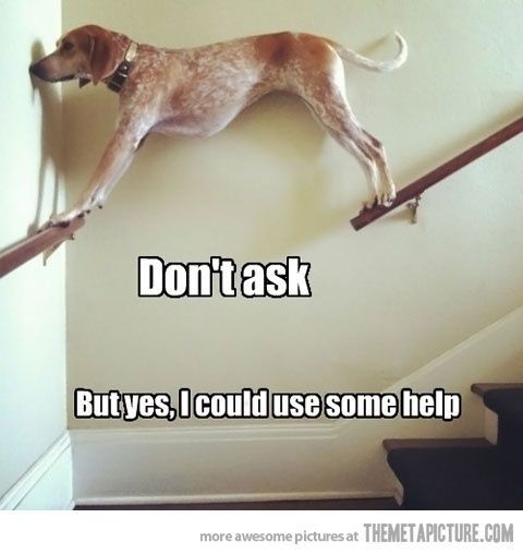 Dont ask #dogs #funny