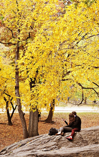 Fall & Romance in Central Park