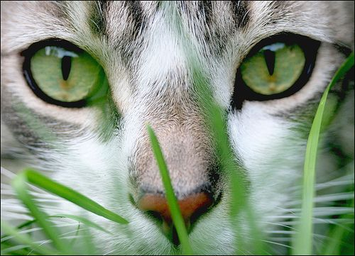 2 things I LOVE ! Green and cats ...both together in one !