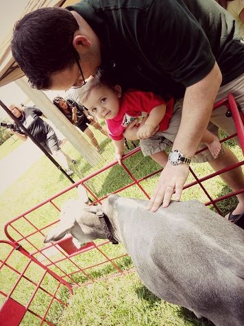 Petting zoo - farm t