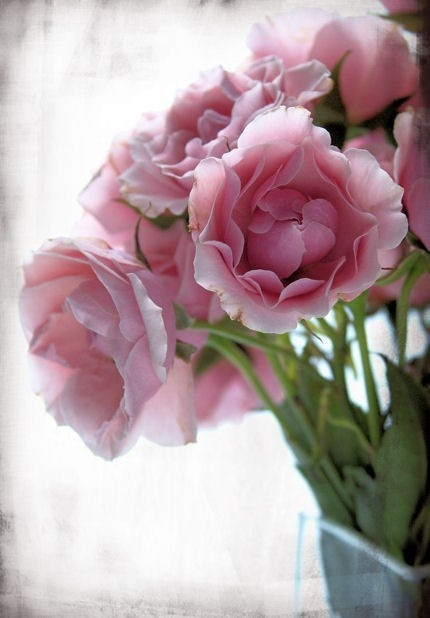 # Pink Roses