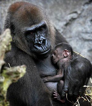 ANIMAL BABY AND MOTHER - Google Search