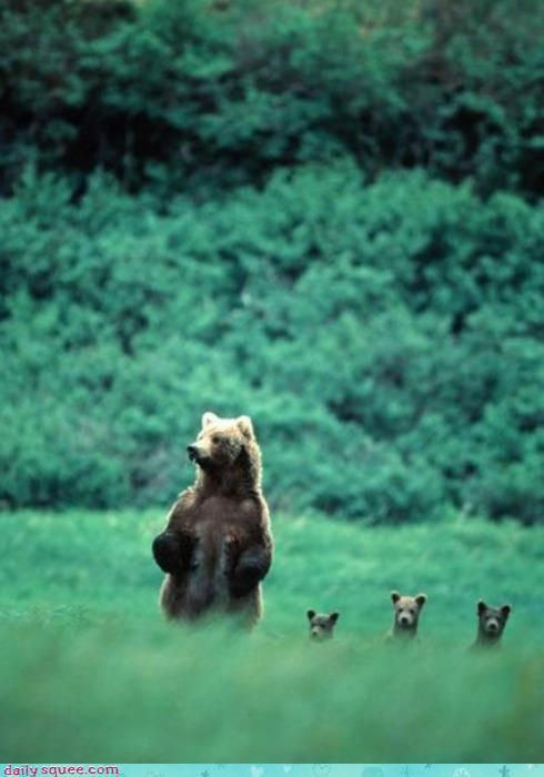 seeing baby animals in the wild is very poignant – their short time with Mama is