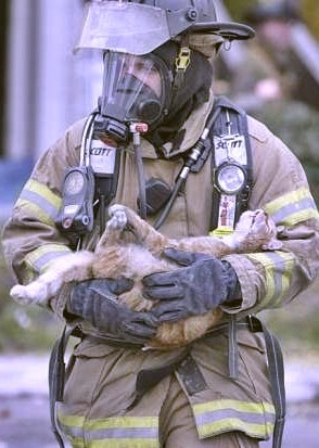 Real Men Don't Make Animals Fight, They Fight For Them