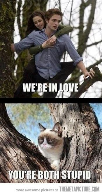 Grumpy Cat strikes again.