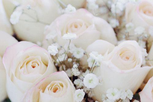 i love white roses