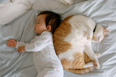 Co-sleeping with the cat... cute!