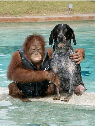 An Orphaned Orangutan and a stray dog find find each other at a Zoo's Animal Treatment Center. Both were lonely and depressed. Now they are inseparable and best friends. Love is love :)