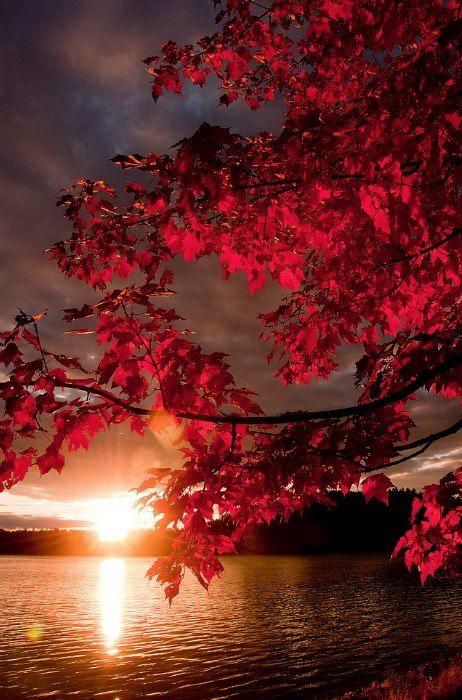 Autumn leaves at sunrise...