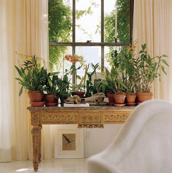 plants under the window
