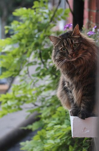 Window ledge cat