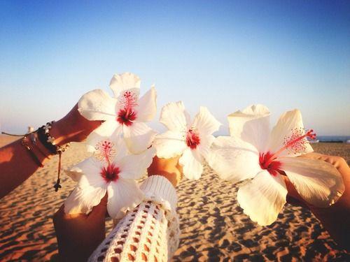 beautiful flowers aloha