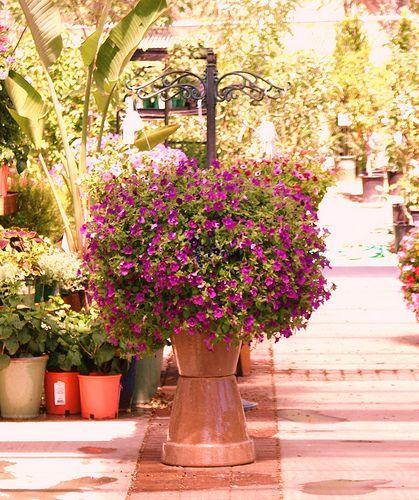 contain gardens
