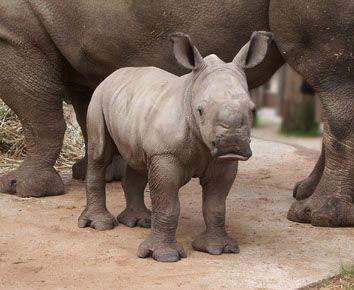 Unusual, cute baby animals - Imgur