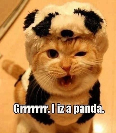 cats, cute, #cats #cute