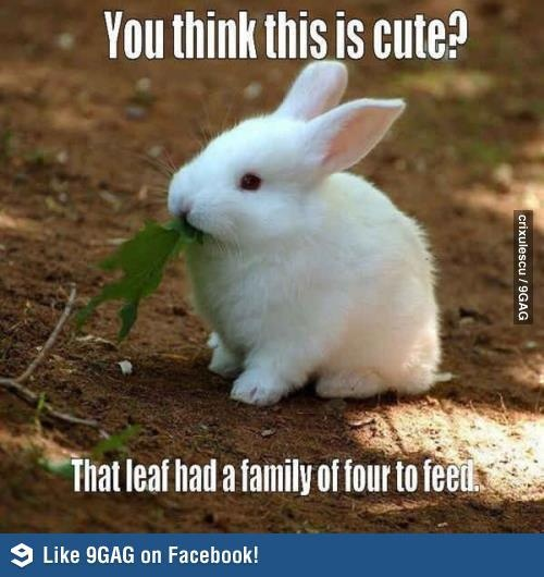 #bunnies #bunny #animals #pets #cute #rabbits