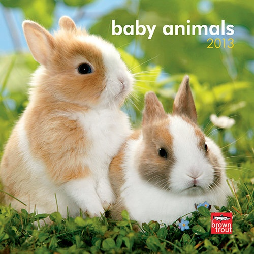 Baby Animals Mini Wall Calendar: How do you make a cute baby animal even cuter? Put him in a mini wall calendar! Here, tininess is even smaller and the infant animal even more life-sized.  $7.99  calendars.com/...