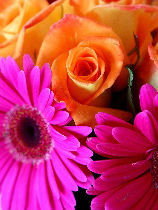 pink gerberas and orange roses