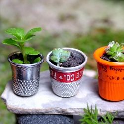 In a miniature greenhouse, thimbles make excellent flower pots. Learn how to make your own mini greenhouse.