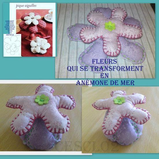 anemone-des-mers.jpg