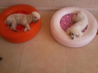 dog bed tires