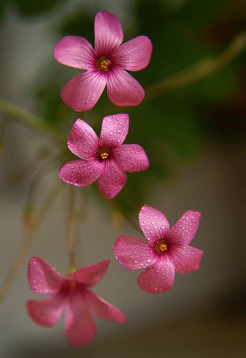 Very beautiful flower!