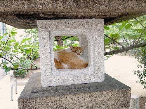 Japanese Summer -- Cat in Stone Lantern