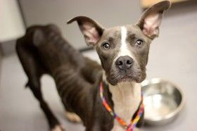 Grace what a great and sad story about Grace.  Please consider adopting her and giving her a forever home.  Atlanta Pet Rescue GA