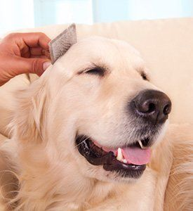 Grooming 101: Clean Pets Are Happy Pets